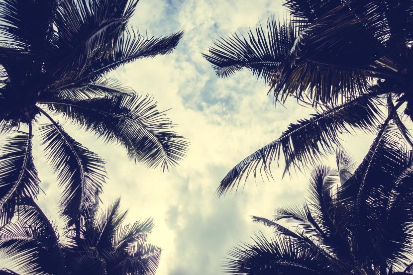 Top 10: As melhores praias do Brasil segundo o Travellers ChoiceTripadvisor