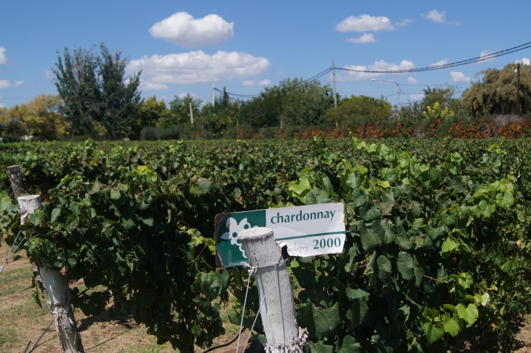 vineyard-1818871_1920.jpg