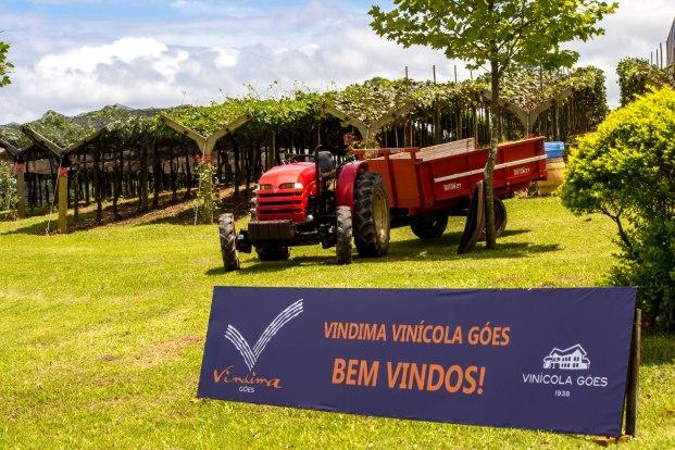 vinicola goes-vindima